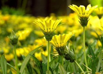 В своем саду цветы желтых оттенков