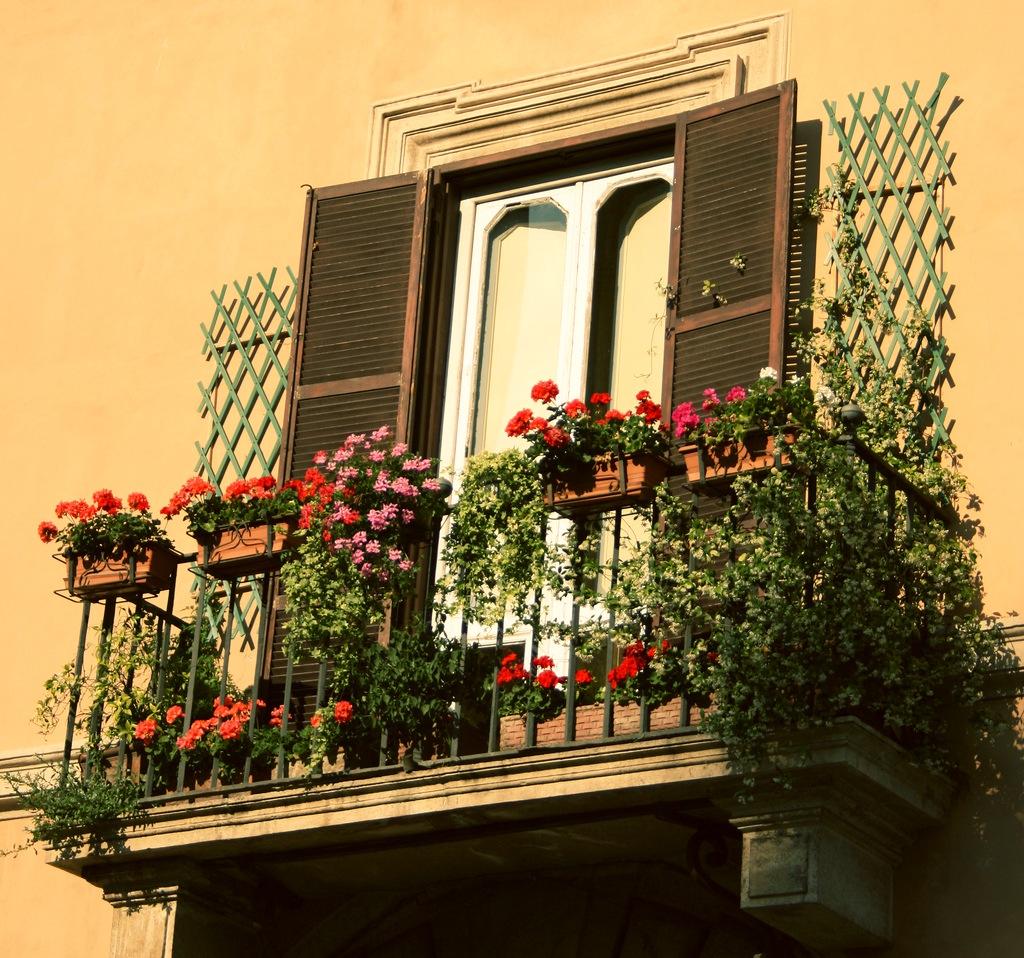 Цветы на балконе Balkonyflower