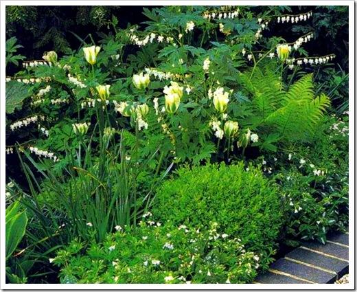 Децентра, папоротник и белые тюльпаны в тени