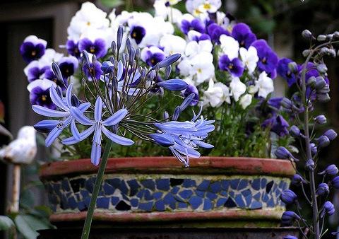 Многолетние луковичные цветы