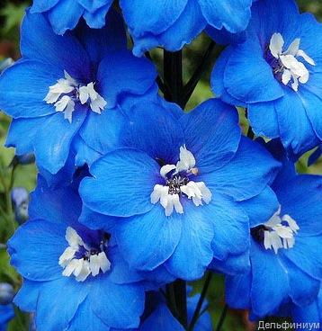 Синий сад зеркало неба