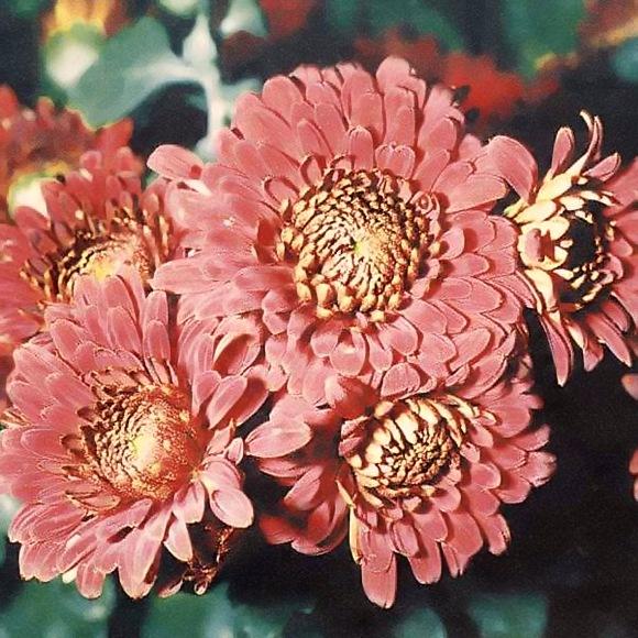 Домашние цветы полив под листья любят