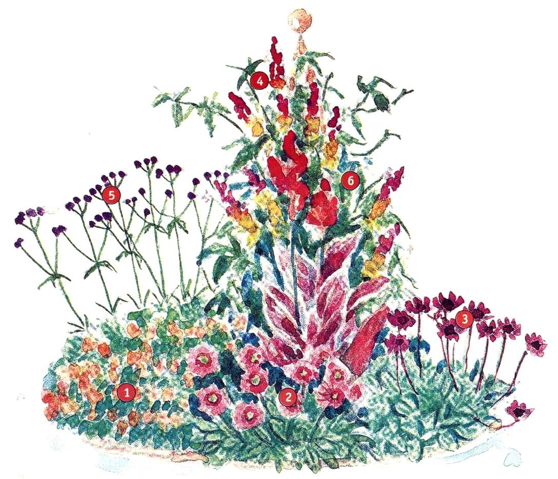 Цветники в красном цвете две схемы