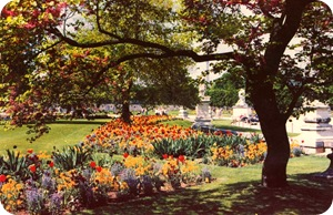Яркие клумбы тюльпанов под деревьями в саду