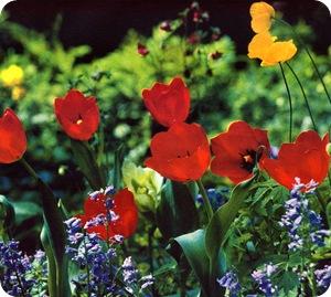 Тенденции цветников - тюльпаны