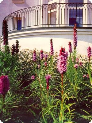 Природные цветники