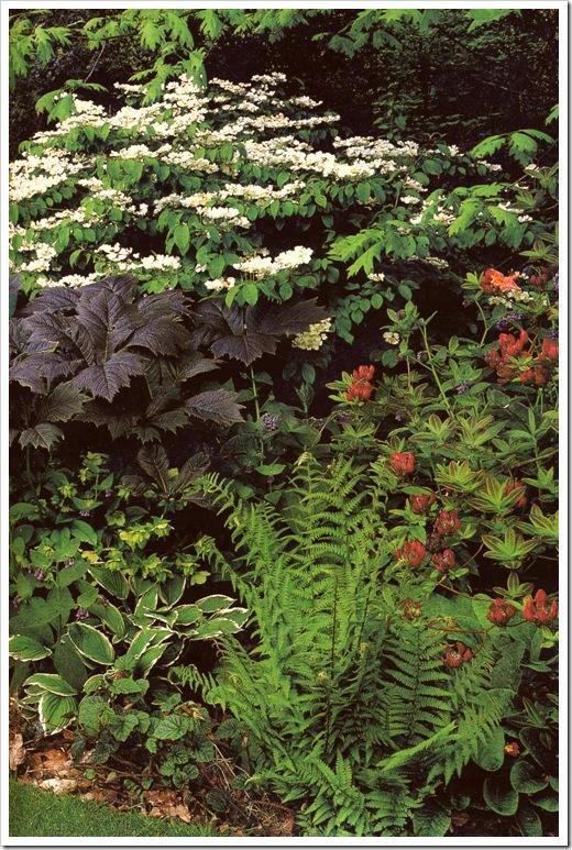 Растения для тени - калина декоративная, рододендрон, роджерсия, морозник