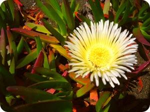 Некоторые любят посуше – цветы для сухих мест