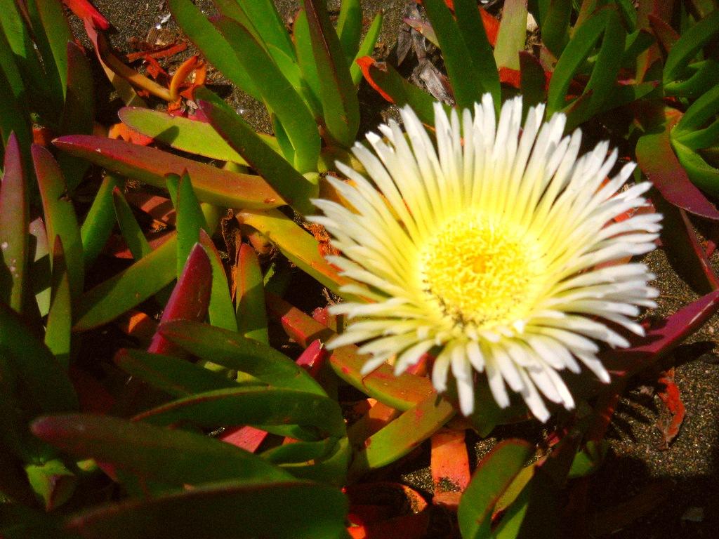 Растения для сухих мест