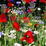 Уход за садом без особого труда