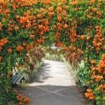 Цирковые акробаты – вьющиеся растения для сада