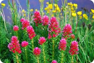Цветочный рай на влажной почве