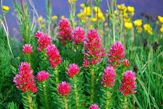 Растения для болотистых мест