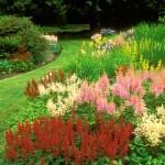 Календарь цветения многолетников