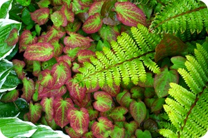 Одежка для земли – почвопокровные растения