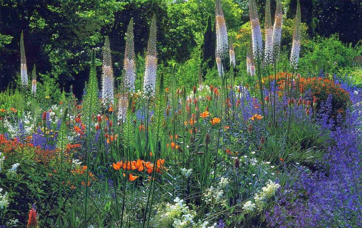 Каталог сорных растений двудольные сорняки злаковые