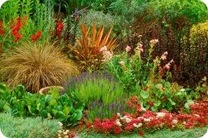 Поселите многолетние цветы в своем саду.  Они многие годы будут радовать вас своим цветением.