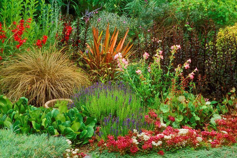 цветы многолетние садовые фото.