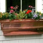 Цветы за окном – контейнерный садик