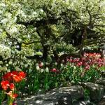 Три идеи цветников для теневого сада
