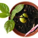Техника выращивания теплолюбивых однолетников