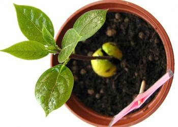Выращивание однолетников