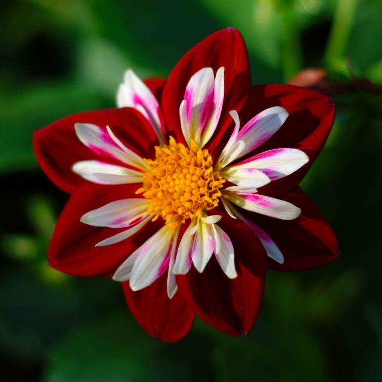 Какие цветы выращивать на школьных