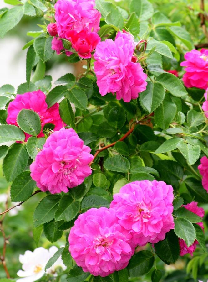 Стих душа цветка