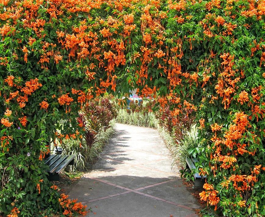 Вьющиеся растения издавна пользуются