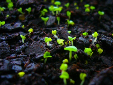 Посадка семян двухлетников