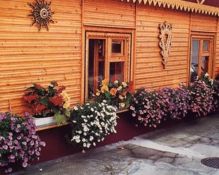 Контейнерный цветник за окном