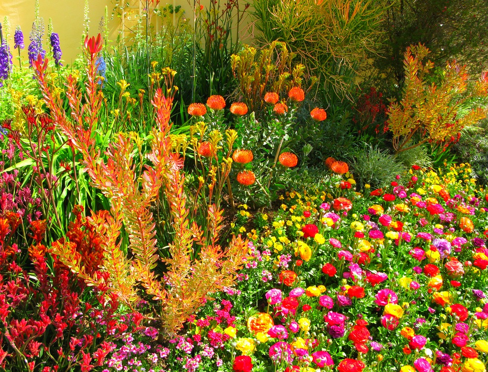 Балконные и домашние цветники