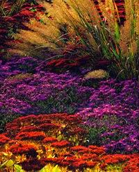 Осенний миксбордер
