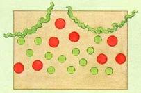 Планировка рабатки