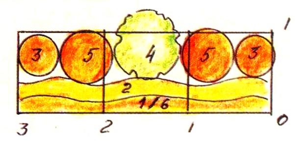 6 Луковичные — тюльпаны