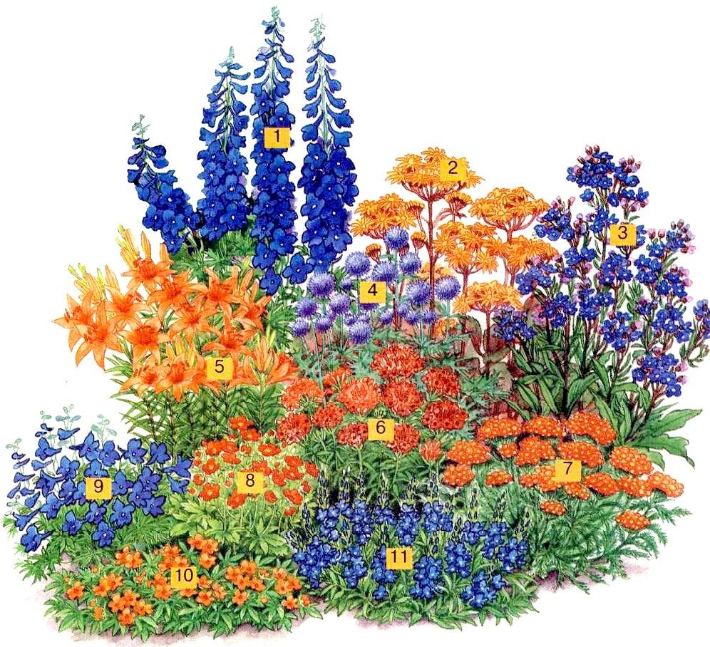 Гармоничные сочетания цветов | Любимые цветы