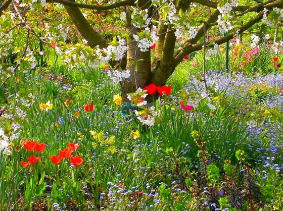 Цветы в тени под деревом
