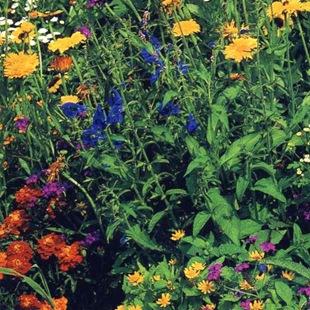 Многоярусный цветник