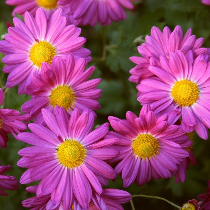 Палитра цветников
