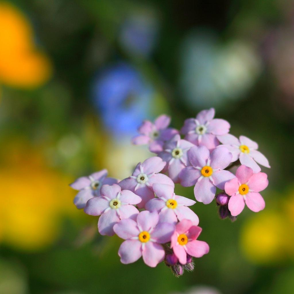 Первый цветочный бал