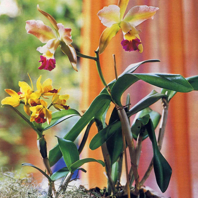 Орхидеи любят тень или солнце