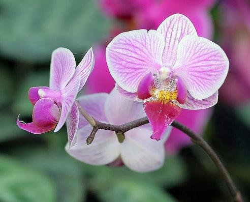 ... самых популярных горшечных растений: flowers.cveti-sadi.ru/uxod-za-domashnej-orxideej