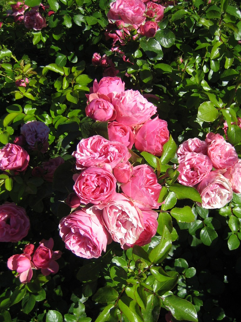 – в радость любимые цветы источник