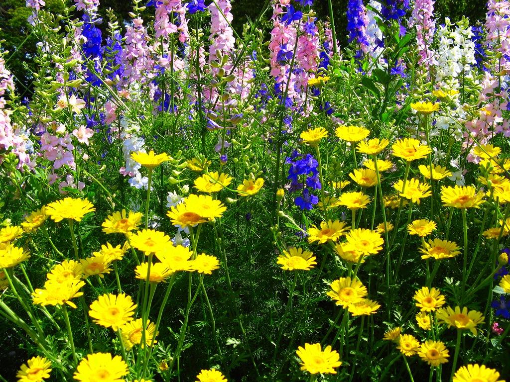 Ботанических садов и парков и