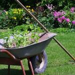 Уход за садом – в радость