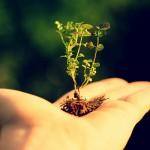 Мартовские заботы о растениях