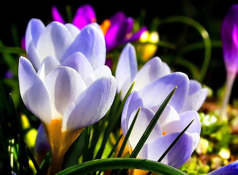 Цветы с их нежной небесно голубой и