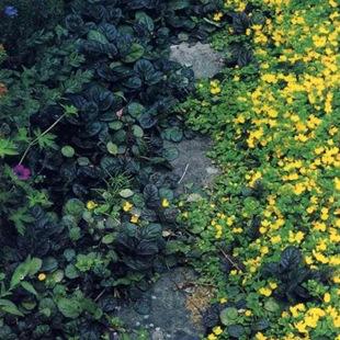 Растения вдоль дорожки