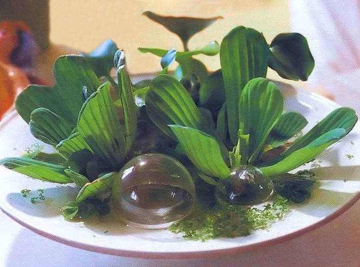 Растения в воде вместо цветов в