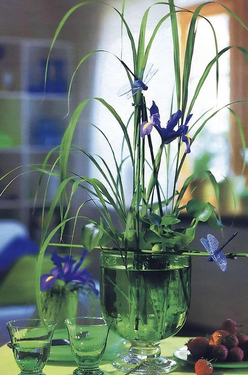Фото комнатных цветов на воде